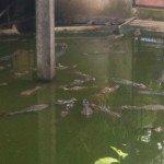 khao kiaeo open zoo